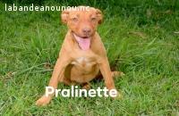 PRALINETTE